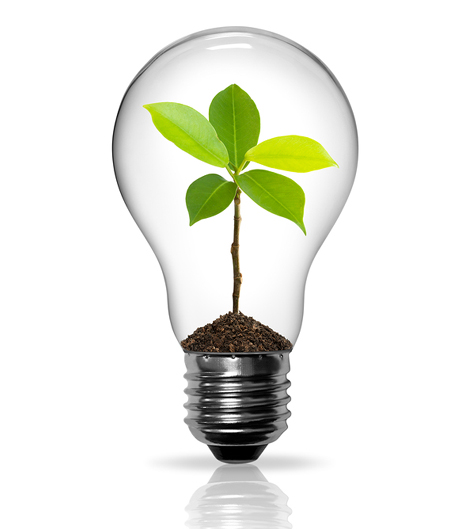 photosynthesis and green light bulb